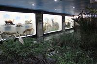 生物标本馆